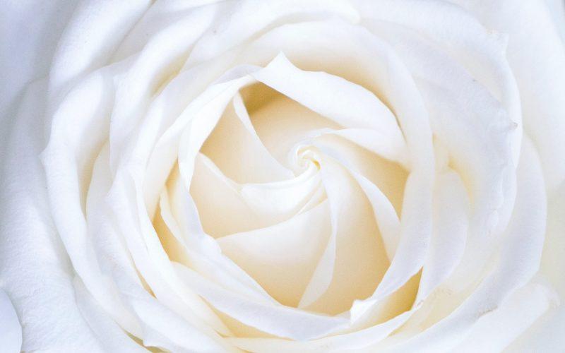 De Witte Roos uitvaartverzorging